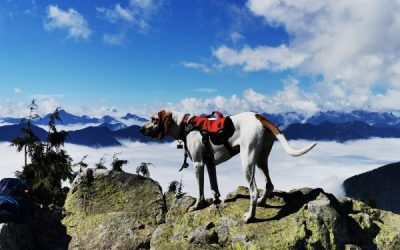 Should I Feed My Dog More After a Long Hike